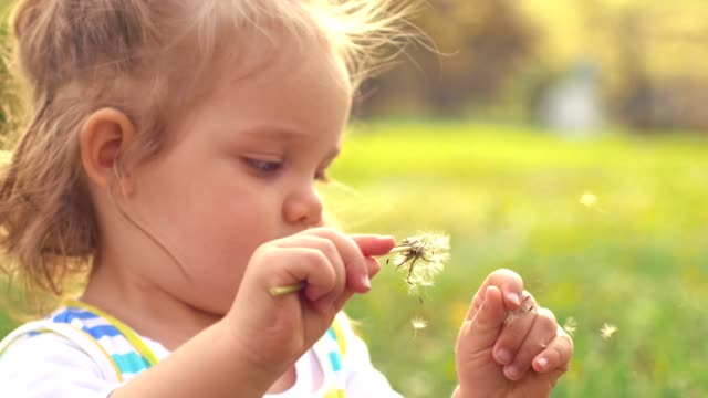 cute girl playing with dandelion - one baby girl only stock videos & royalty-free footage