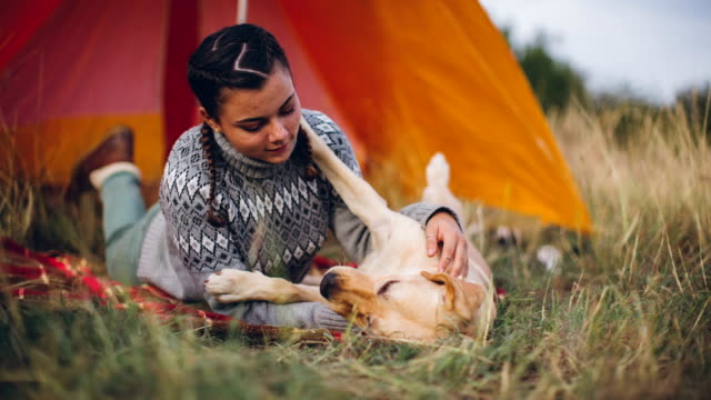 cute girl playing with her dog in front of her tent - tent stock videos and b-roll footage