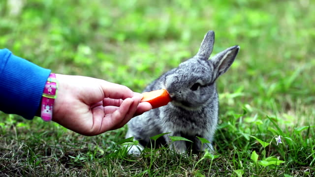 Cute gray baby rabbit