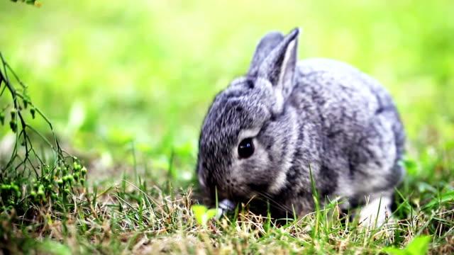 cute gray baby rabbit - rabbit animal stock videos & royalty-free footage