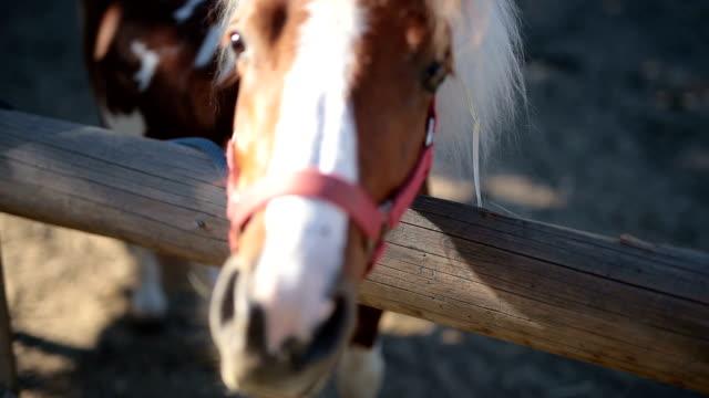 かわいいホース - 動物の色点の映像素材/bロール