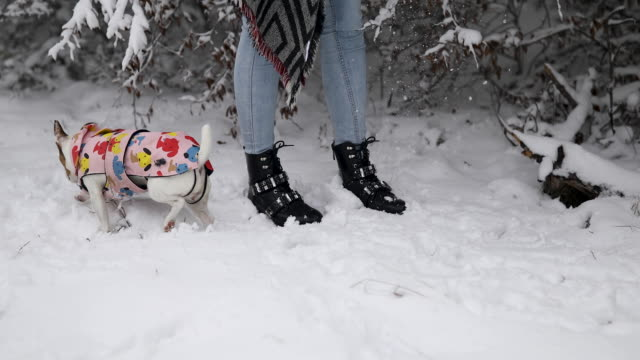 cute jack russell terrier in pet clothing running on snow around woman during winter in nature - pet clothing stock videos & royalty-free footage