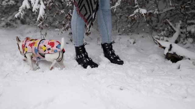 vídeos de stock, filmes e b-roll de bonito jack russell terrier em roupas de estimação correndo na neve em torno de mulher durante o inverno na natureza - pet clothing