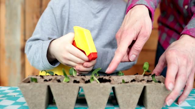 vídeos de stock e filmes b-roll de cute kid and his mother re-potting germinated seeds while quarantined at home at springtime - colocar planta em vaso