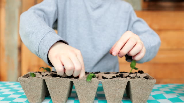 cute kid and his mother re-potting germinated seeds while quarantined at home at springtime - cucumber stock videos & royalty-free footage