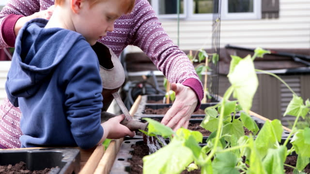 cute kid and mother gardening and watering garden while quarantined at home during springtime - vegetable stock videos & royalty-free footage