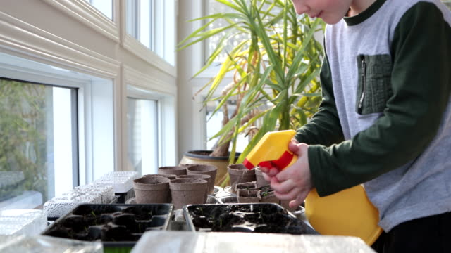 cute kid re-potting germinated seeds while quarantined at home at springtime - watering can stock videos & royalty-free footage