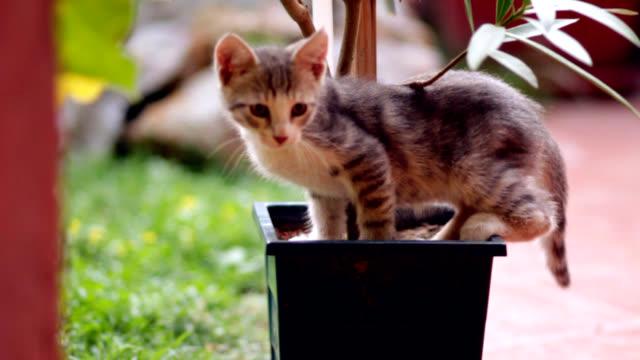 cute kitten in garden - mixed breed cat stock videos & royalty-free footage