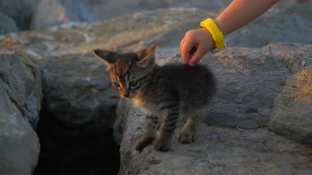 cute kitten is playing with a child - shy stock videos & royalty-free footage