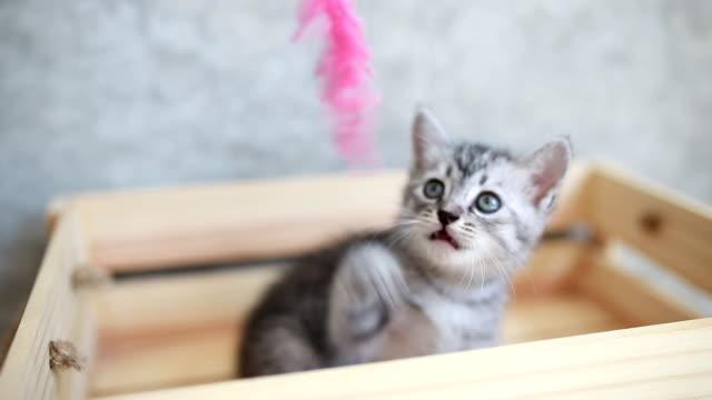 cute kitten playing in box - kitten stock videos & royalty-free footage
