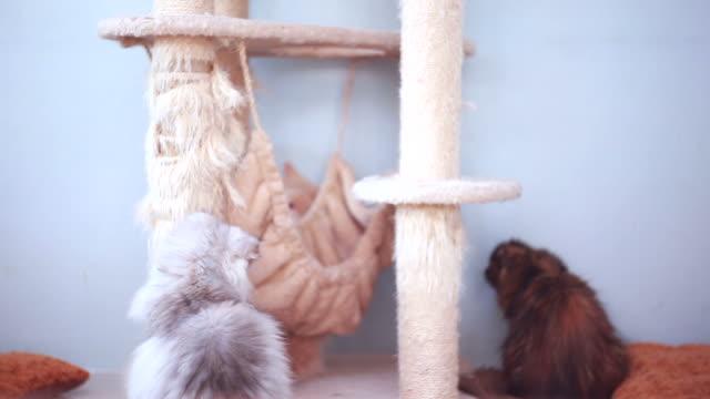 Süße Kätzchen spielen
