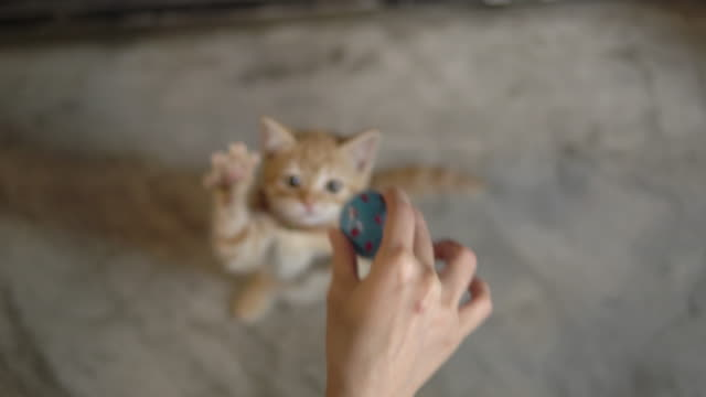 cute kitten playing with a ball - ball of wool stock videos & royalty-free footage