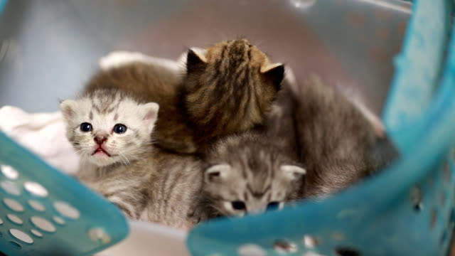 cute kitten - basket stock videos and b-roll footage