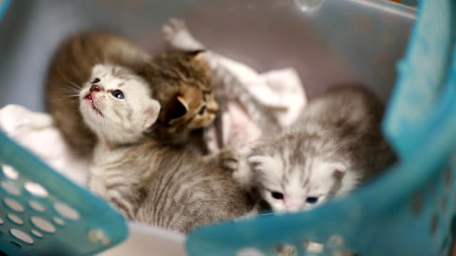 cute kitten - young animal stock videos & royalty-free footage