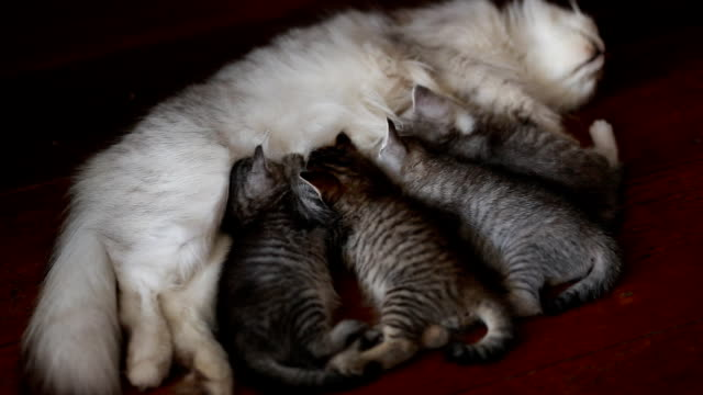 cute kitten with mother - animal family stock videos and b-roll footage