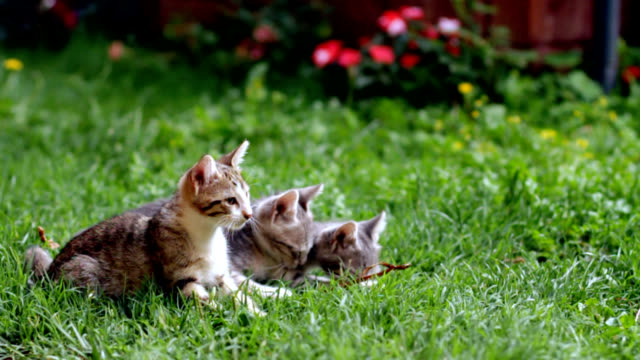 cute kittens in garden - mixed breed cat stock videos & royalty-free footage