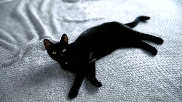 cute, lazy kitty lying on bed - blanket texture stock videos and b-roll footage