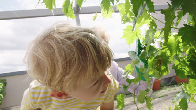cute little boy looking at the plants with his grandmother - showing stock videos & royalty-free footage