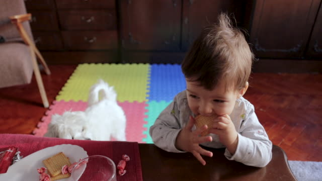 cute little boy standing in living room and eating cookie. baby boy without teeth trying to eat cookie in living room early in the morning. sweet breakfast is best breakfast - biscuit stock videos & royalty-free footage