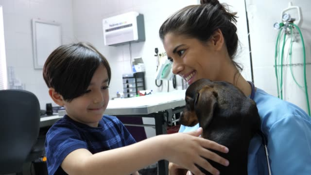 cute little boy stroking his pet while vet holds the dog both looking very happy - adoption stock videos & royalty-free footage