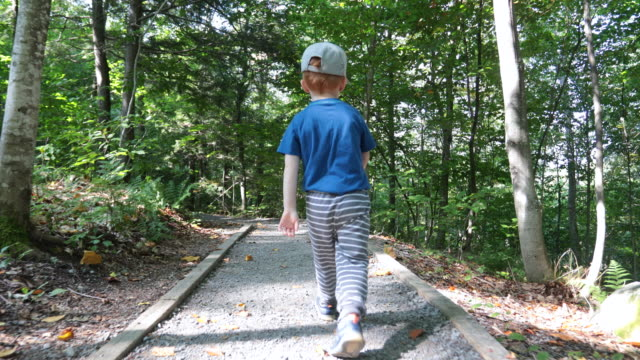 cute little boy toddler exploring forest on hiking trail - lost stock videos & royalty-free footage