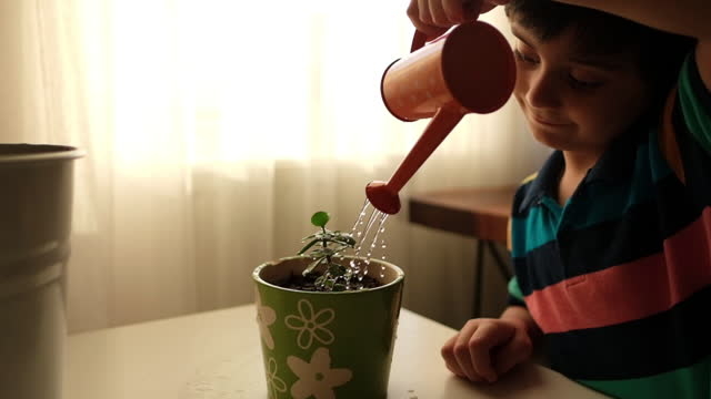 cute little boy watering plants with watering can in the garden. - three quarter length stock videos & royalty-free footage