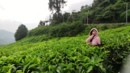 A cute little Chinese girl visit tea Plantations in Cameron Highlands Malaysia, sunrise in early morning. She is very happy enjoying in nature.