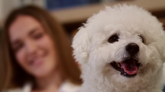 cute little dog enjoying while getting cuddles from his owner - pet bed stock videos and b-roll footage