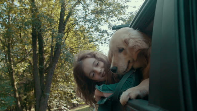 hd: cute little girl and dog in car. - 汽車 個影片檔及 b 捲影像
