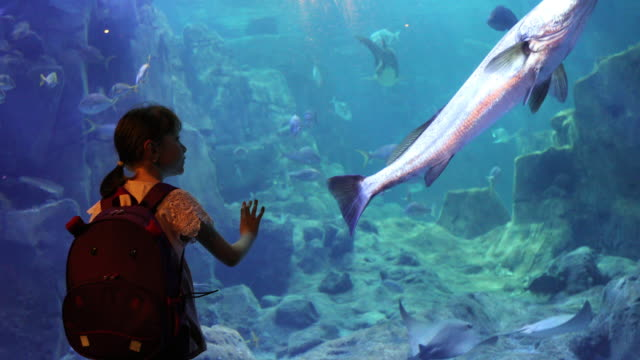 cute little girl looking at the fish in a big aquarium - aquarium stock videos & royalty-free footage