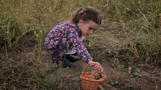 Cute Little Girl With A Basket Picking Up Organic Food From The Vegetable Garden. Real People, Rural Scene.