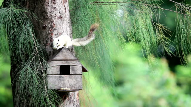 cute little squirrel on a tree house in the garden. - birdhouse stock videos & royalty-free footage