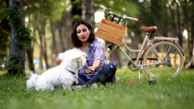 cute maltese dog excitedly awaiting for snack from beautiful brunette woman - maltese dog stock videos and b-roll footage
