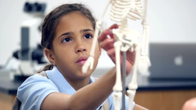 cute mixed race private school student examines human skeleton model - anatomy stock videos & royalty-free footage