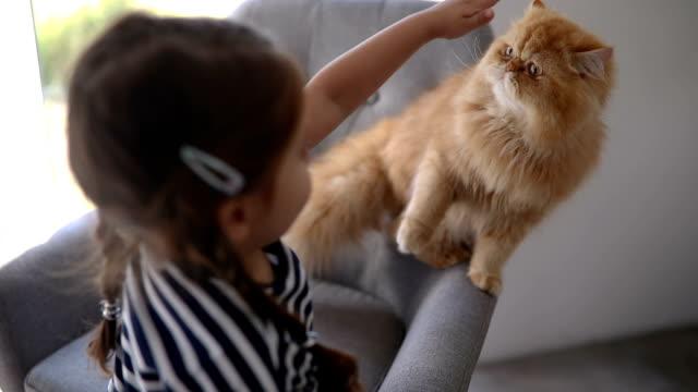 süße verspielte kind spielt mit ihrer katze zu hause - sessel stock-videos und b-roll-filmmaterial