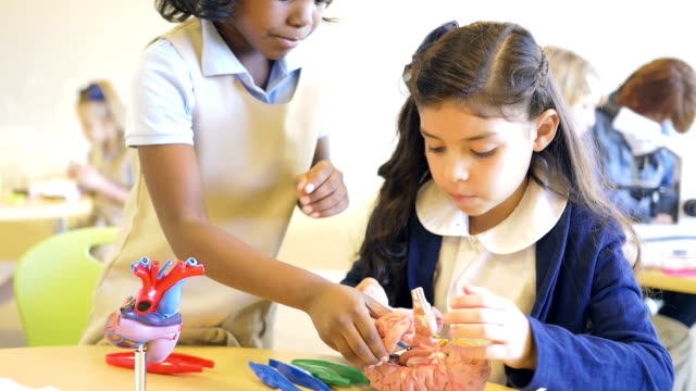 Cute private elementary school science students studying model brain in classroom