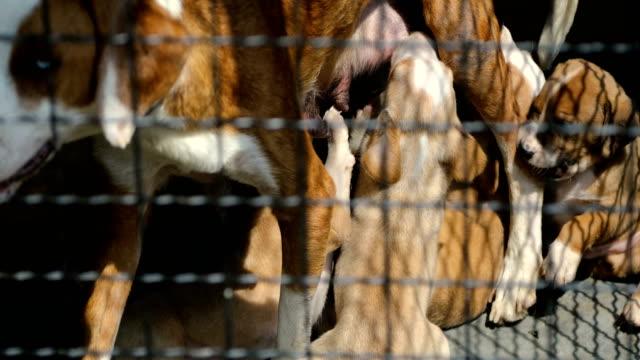 cute puppies drinking mommy's milk - animal leg stock videos & royalty-free footage