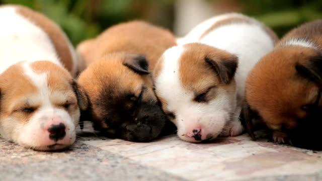 vídeos de stock, filmes e b-roll de lindo puppies - filhote de animal