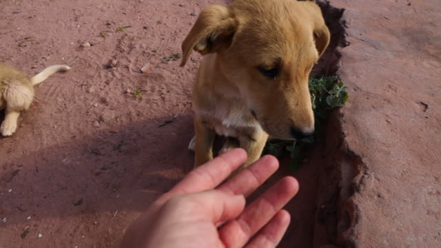 cute puppies waiting for food in the ancient city of petra. - middle eastern culture stock videos & royalty-free footage