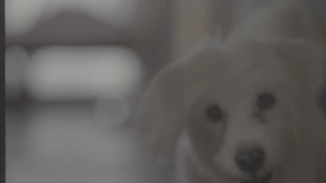 cute puppy at home - head stock videos & royalty-free footage