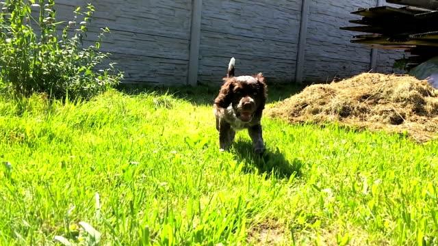 Cute puppy exploring garden