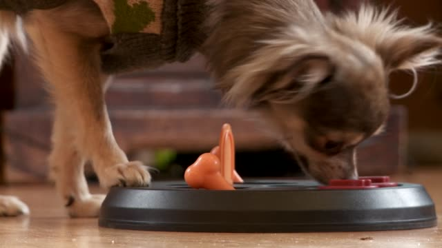 vídeos de stock, filmes e b-roll de cute puppy figures out a puzzle - biscoito de cachorro