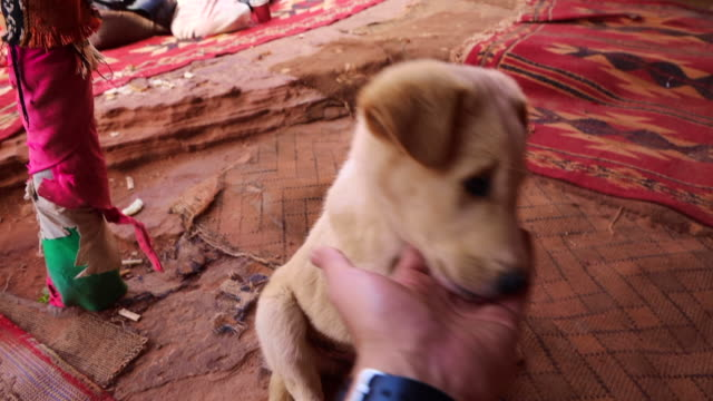 vídeos de stock, filmes e b-roll de cute puppy licking human hand from personal perspective in petra. - lambendo