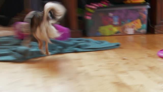cute puppy plays excitedly