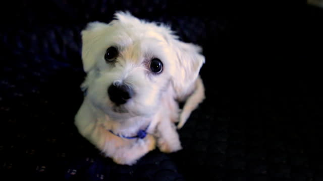 cute puppy - parte del corpo animale video stock e b–roll