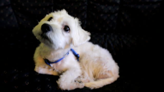 stockvideo's en b-roll-footage met schattige puppy - gekanteld