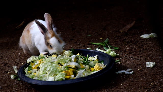 cute rabbit eating food - domestic animals stock videos & royalty-free footage