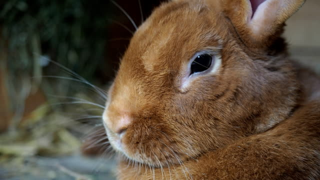 cute rabbit in the hutch - captive animals stock videos and b-roll footage