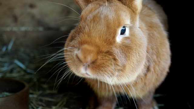 cute rabbit in the hutch - rabbit animal stock videos and b-roll footage