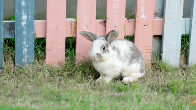 cute rabbit on green grass, concept bunny and easter. - cottontail stock videos & royalty-free footage